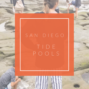 San Diego Tide Pools - www.spousesproutsme.com