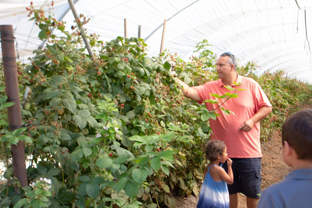 McGrath Family Farm - Top things to do in Camarillo - www.spousesproutsme.com